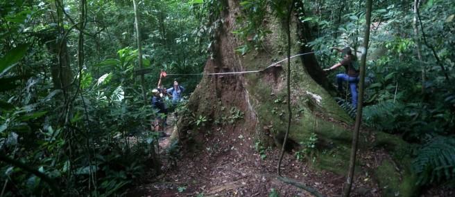 floresta-da-tijuca_capa.jpg